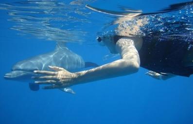 delphine_schwimmen