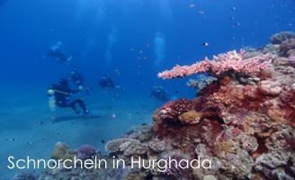 Hurghada Hotel Transfer